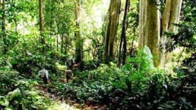 Over $123mil for afforestation to 2021