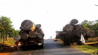New required licenses bring new sufferings to wood importers