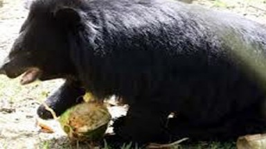 104 bears to be removed from national park