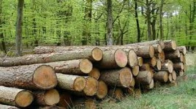 End sought to illegal logging