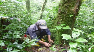 Special-use forests in Vietnam getting poorer